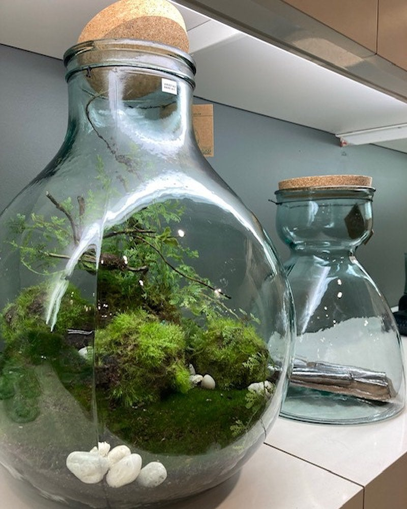 Get creative and add an ecological atmosphere to your interior with our new terrariums and glass vases. Made from recycled Spanish glass, these terrariums are in 2 sizes and come complete with the tools you need. For added ease the top is large enough to put your hand inside and place the plants. . . #terrariums #glassvases #recycledglass #vases